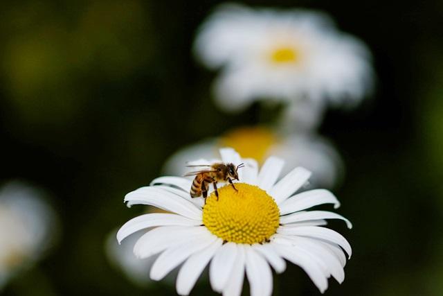 LaryTales_Bienenfreundlich